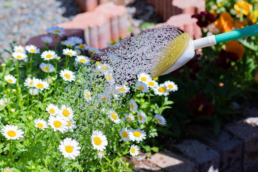 花に水をかける