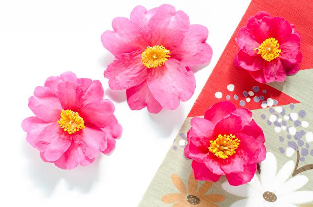 サザンカの花と和柄の布