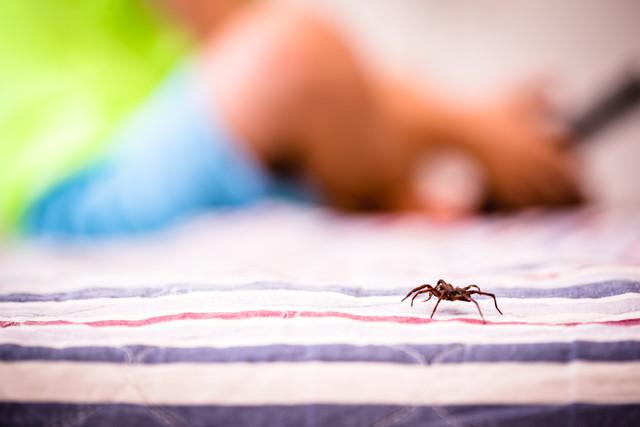 蜘蛛を殺してはいけない理由とは
