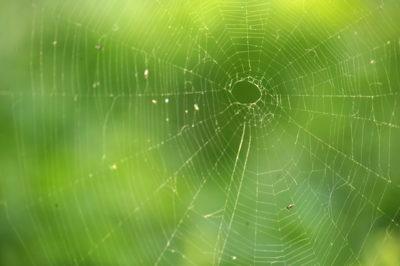 害虫を退治してくれる蜘蛛