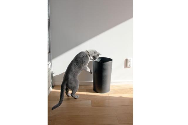 ゴミ箱を覗き込む猫