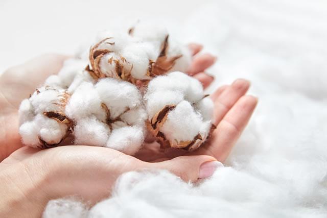 手に持った綿