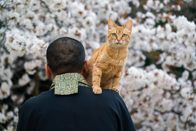 猫とお坊さん