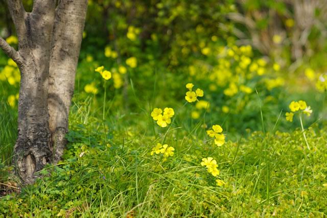 雑草の生える空き地