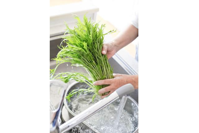 水菜を洗う手