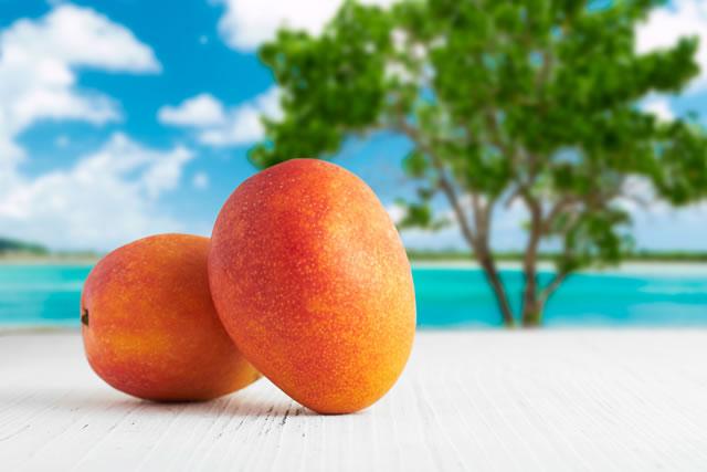 海が背景のマンゴー