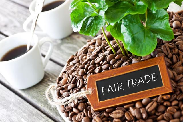 コーヒーの木とコーヒー豆