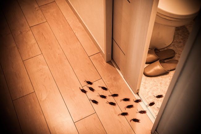 トイレから出てくる複数のゴキブリ