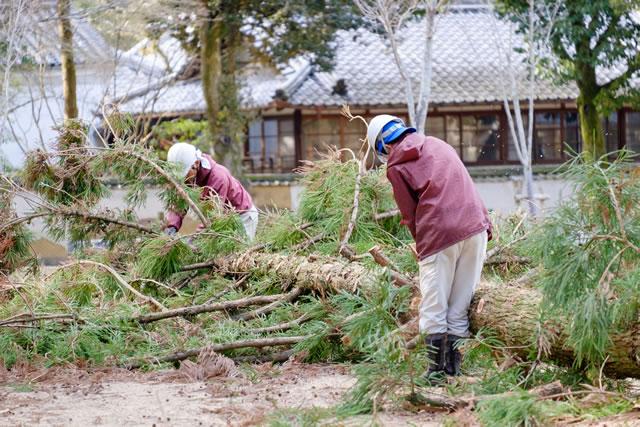 木を切る作業員