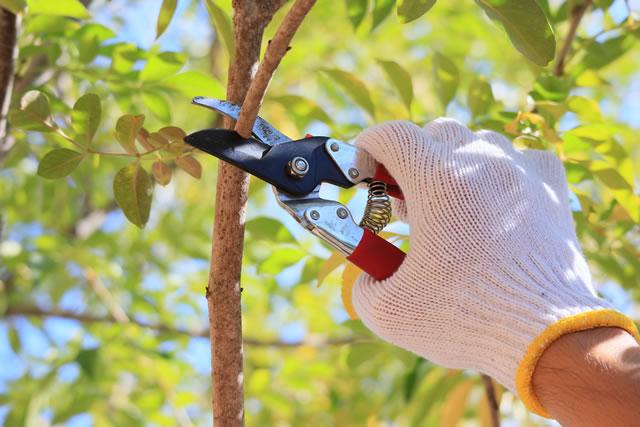 枝を剪定する手