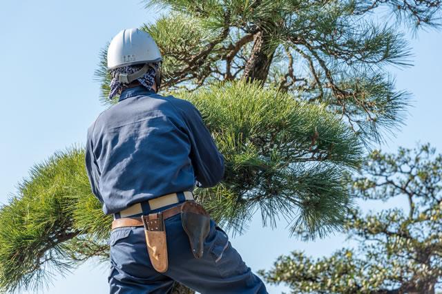 庭木を切る業者