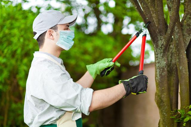 木を切る業者
