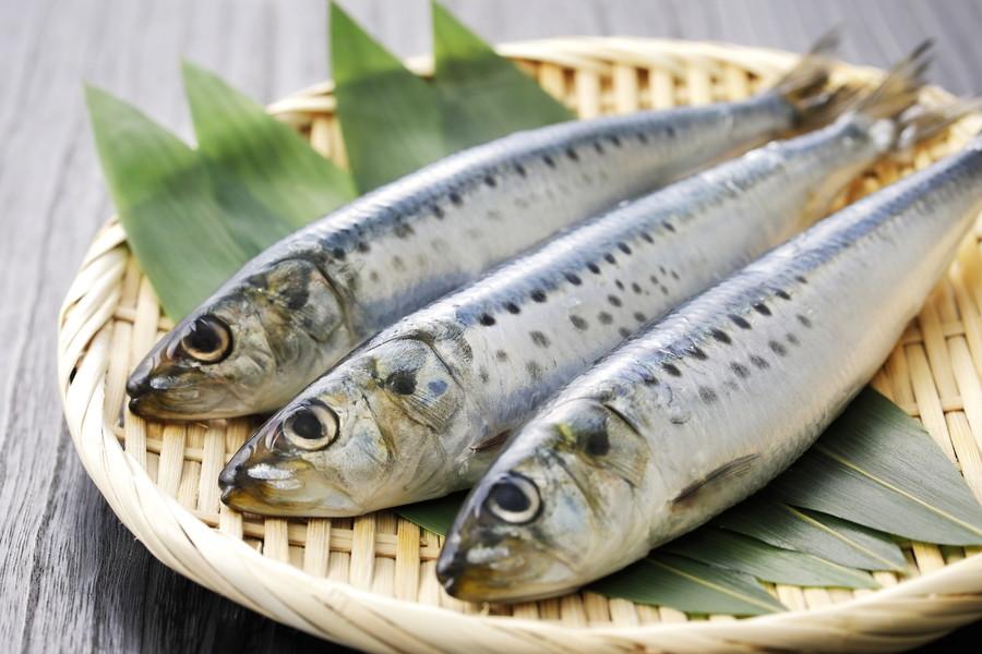 魚の栄養素