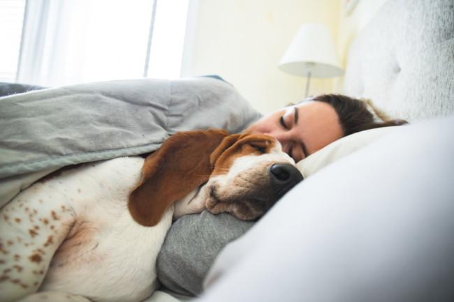 犬とベッドで睡眠している女性
