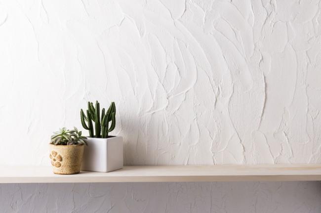 室内の棚に置かれたサボテンなどのミニ観葉植物