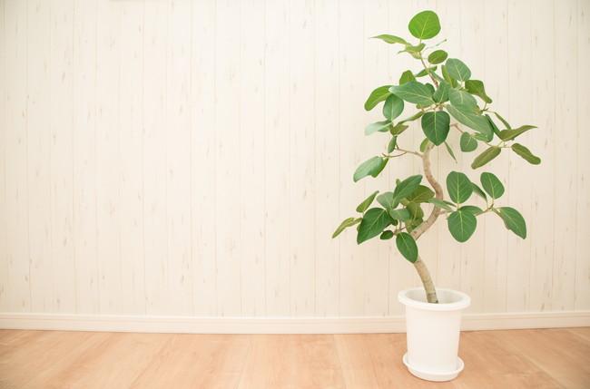 室内のフローリングの上に置かれた観葉植物