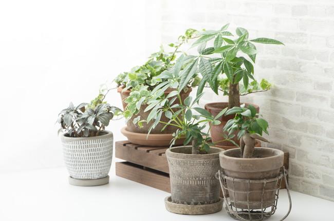 インテリアとして置かれた複数の観葉植物