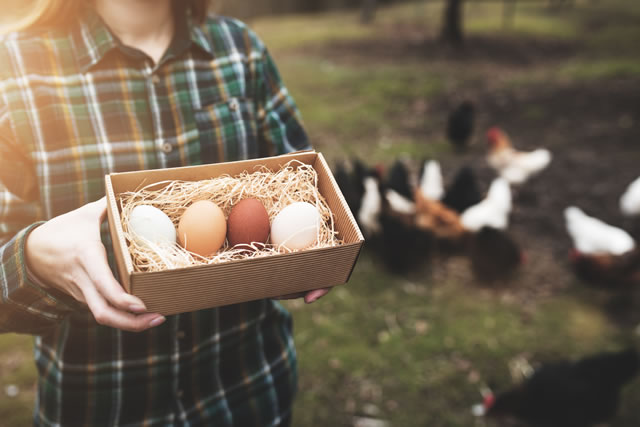 箱に入った卵を持つ農家人