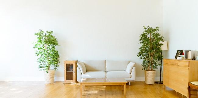 大きな観葉植物が置かれた明るいリビングルーム