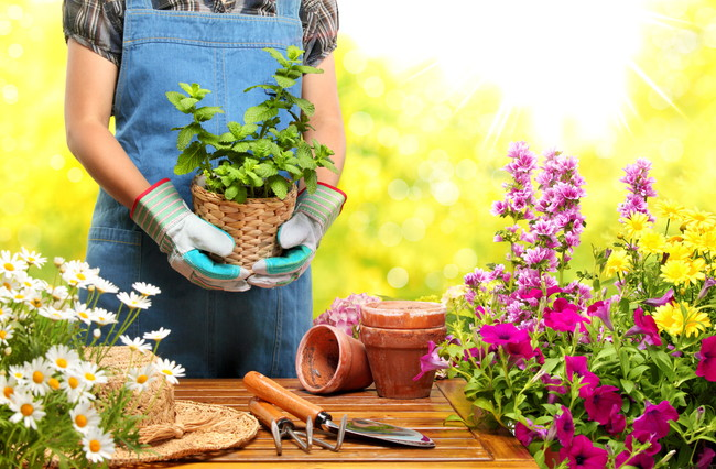 季節の花やハーブでガーデニングをしている女性