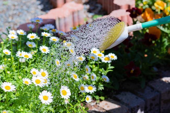 下段の花に水やりをしているところ