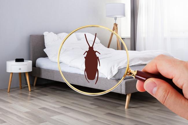 家の中にいる虫
