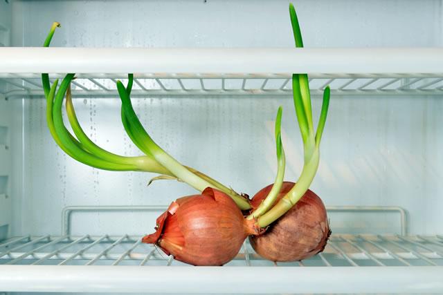 冷凍庫の中の玉ねぎ