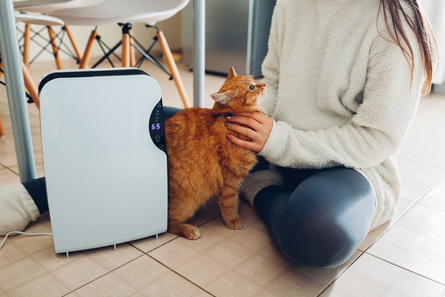 加湿器と猫と人