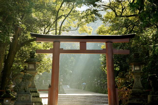 朝日と神社の鳥居