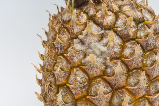 パイナップルの表面に生えた白カビのアップ