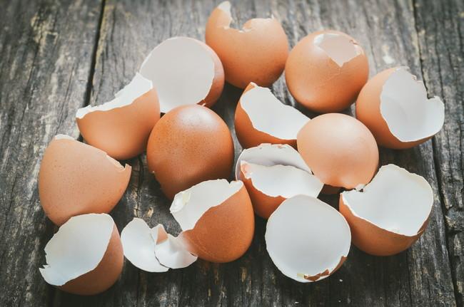 たくさんの卵の殻