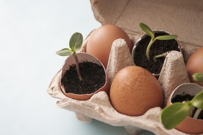卵の殻の鉢植え