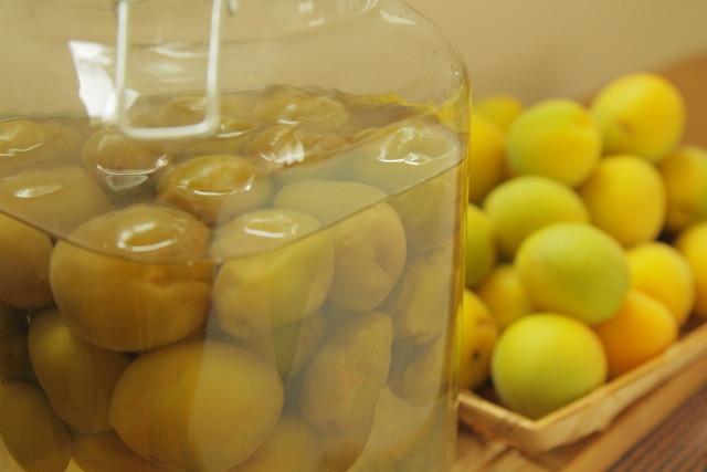 黄色い梅と梅シロップ