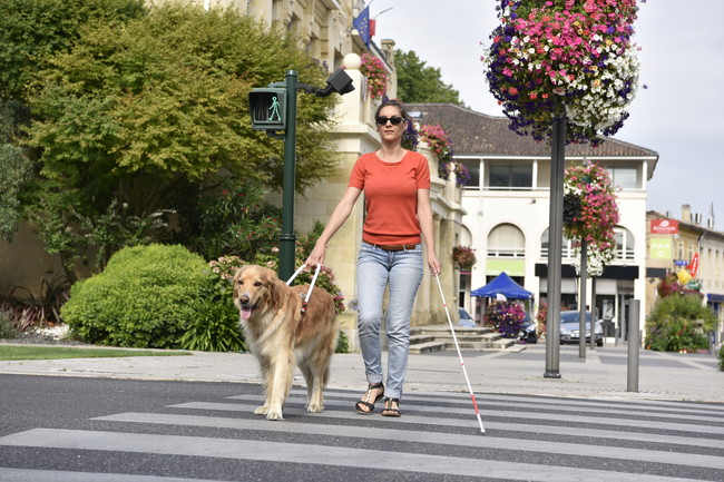 白杖を使い盲導犬と歩く女性