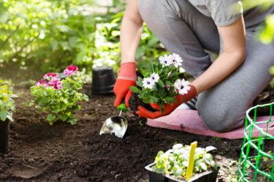花を植える様子