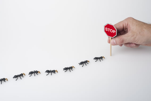アリをストップさせるイメージ