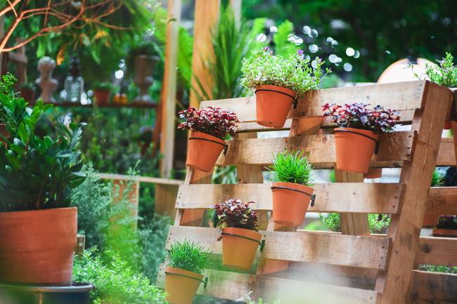 キレイな鉢植え