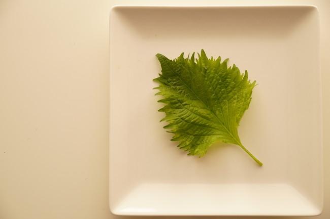 白いお皿の上の大葉