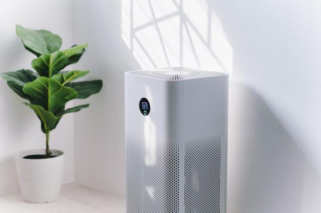 空気清浄機と観葉植物