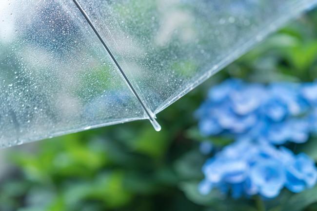 アジサイと傘