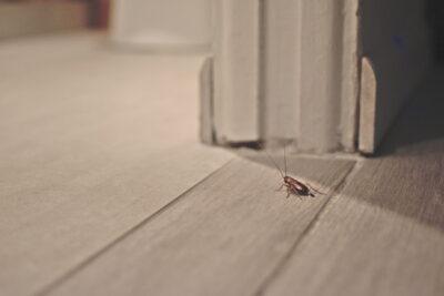 家の中のゴキブリ