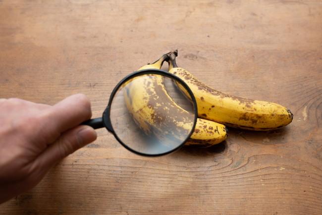 虫眼鏡でバナナを観察