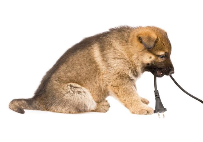 コンセントコードを加える犬