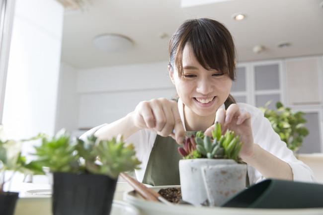 多肉植物を育てる女性