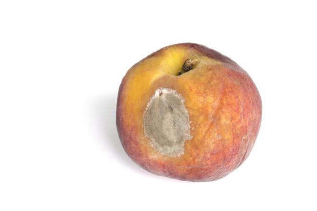カビが生えてきた桃