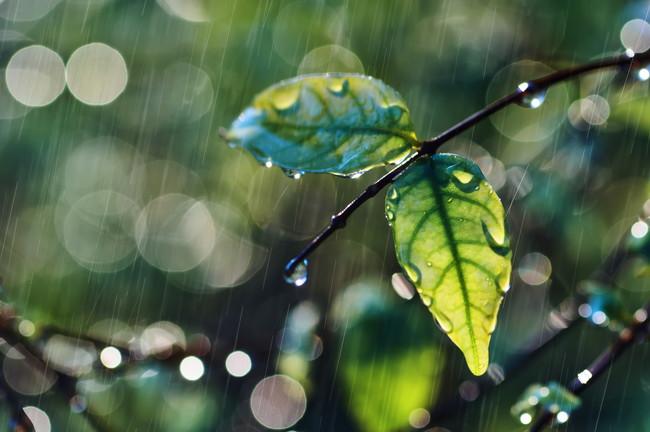 濡れた葉っぱ