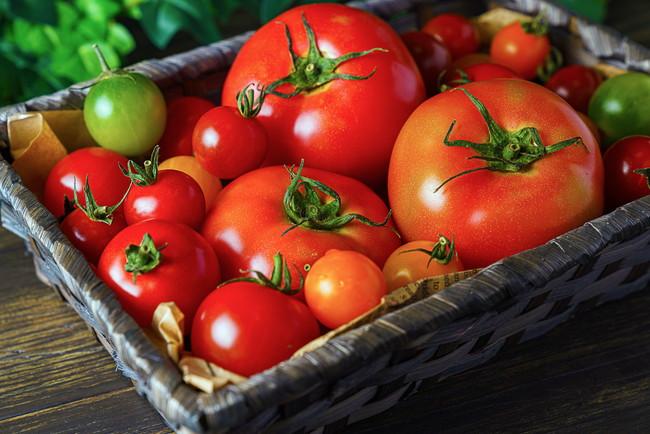さまざまなサイズの新鮮なトマト