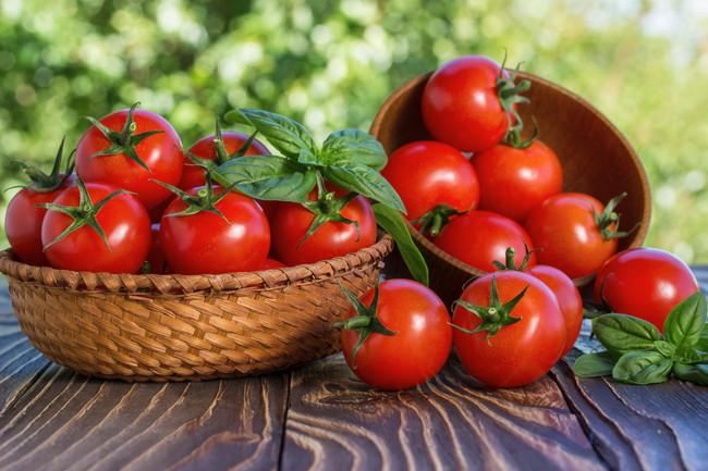 収穫したての新鮮なトマト