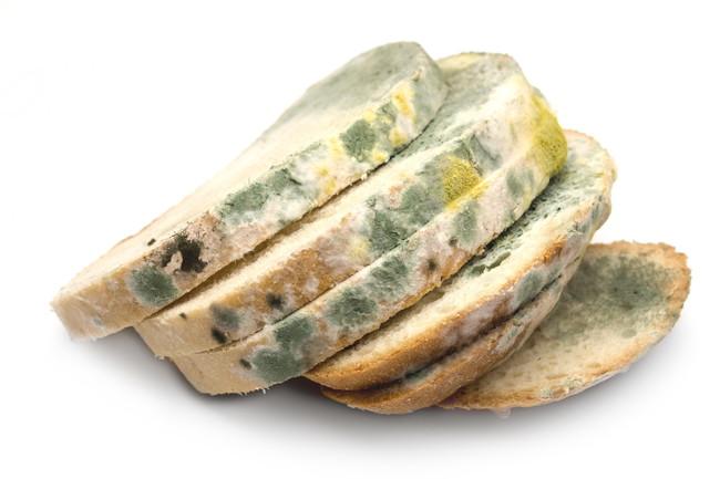 カビの生えたパン