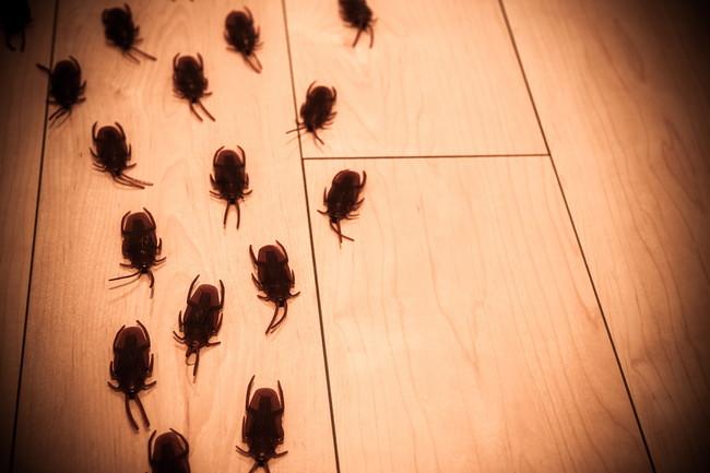 ゴキブリの大群